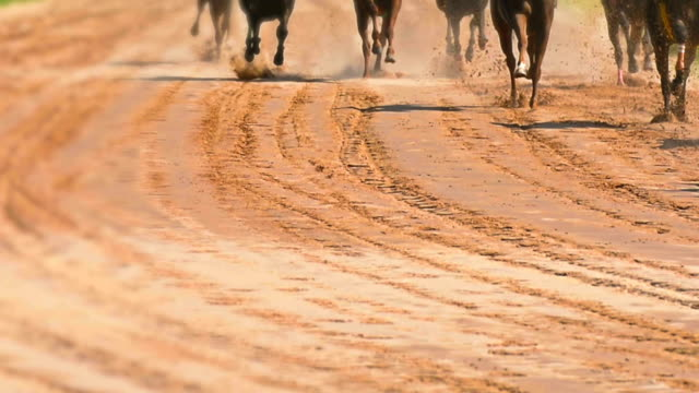 hästkapplöpning - racehorse track bildbanksvideor och videomaterial från bakom kulisserna
