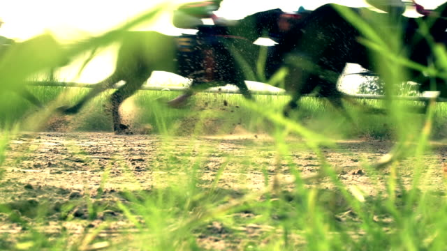 馬のレース ビデオ
