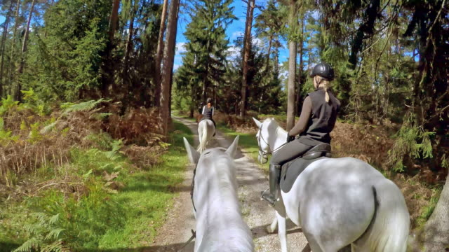 POV Horse rider on a ride through forest with friends