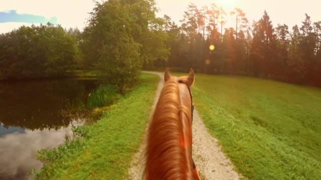 POV Horse riding along a lake in sunshine video