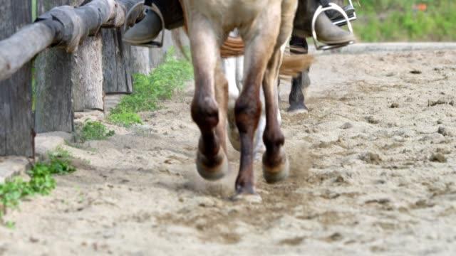 horse riding lessons - attività equestre ricreativa video stock e b–roll