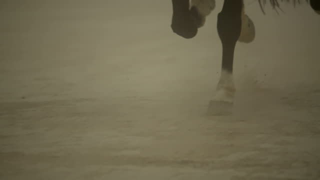 (Slow Motion) Horse Running- Hoof Close Up video