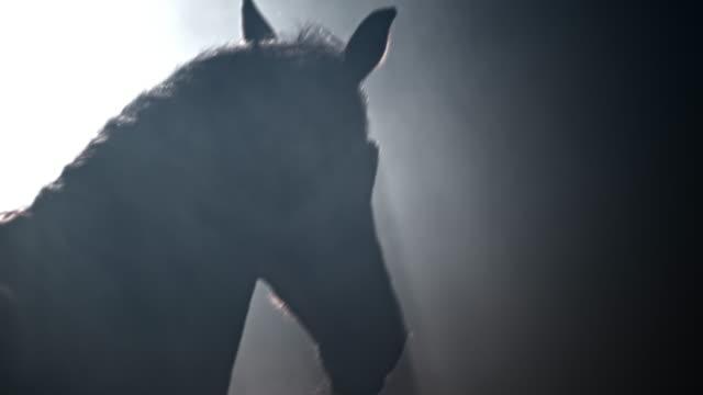 slo mo horse springer in i mörkret - racehorse track bildbanksvideor och videomaterial från bakom kulisserna