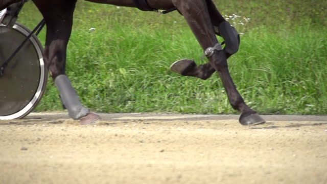 hd-super langsam mo: pferd läuft auf der rennstrecke - pferderennen stock-videos und b-roll-filmmaterial