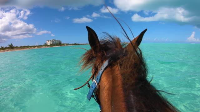stockvideo's en b-roll-footage met paard dat door oceaanturken en caicos loopt - providenciales