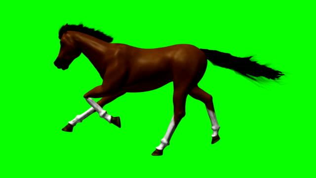 cavallo da corsa con verde schermo hd 1080 - cavallo equino video stock e b–roll