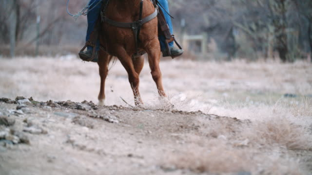 a horse runs with a rider on its back - imbracatura video stock e b–roll
