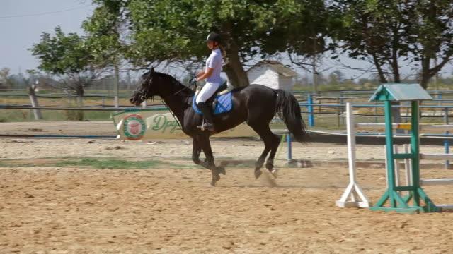 horse sport, jumping - hästhoppning bildbanksvideor och videomaterial från bakom kulisserna