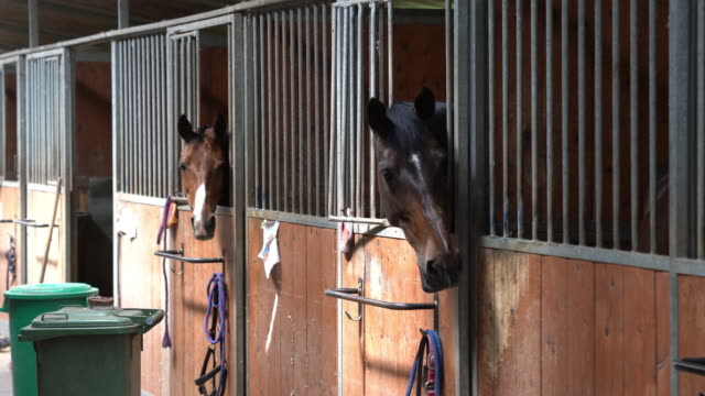 Horse stalls in a horse riding school
