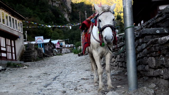 Horse standing near the road Horse standing near the road on the Annapurna trek saddle stock videos & royalty-free footage