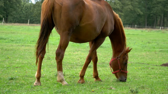 horse standing on the meadow in 4k in 4k - cavalla video stock e b–roll