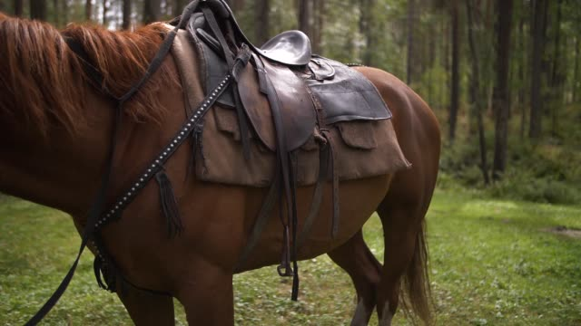 horse stands in the forest