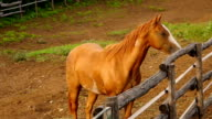 istock horse starts running and galloping inside a farm 509263242