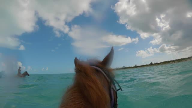 stockvideo's en b-roll-footage met paard dat door oceaanturken en caicos zwemt - providenciales