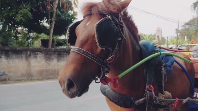 Horse taxi at the streets of Lampang