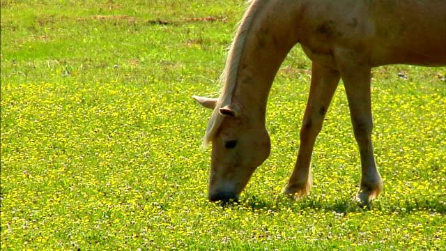 cavallo  - stallone video stock e b–roll