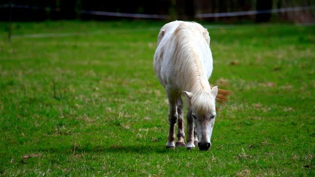 horse video