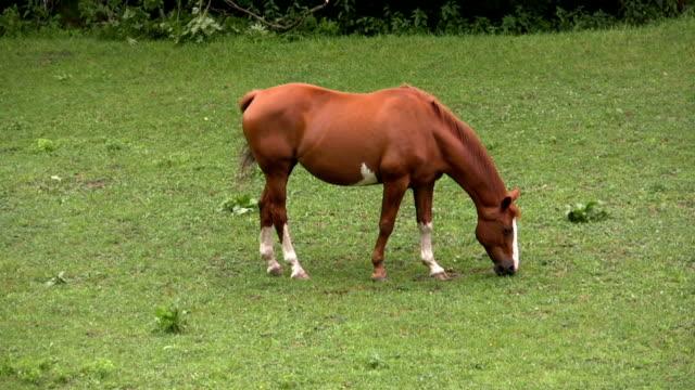 vidéos et rushes de hd: cheval - apprivoisé