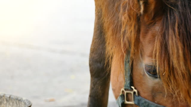 stockvideo's en b-roll-footage met paard - minder dan 10 seconden