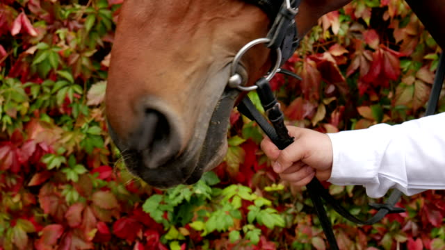 Horse. video