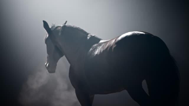 slo mo horse promenader i en dimmig natt - racehorse track bildbanksvideor och videomaterial från bakom kulisserna