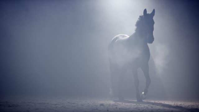 slo mo horse går genom dimma på natten - racehorse track bildbanksvideor och videomaterial från bakom kulisserna