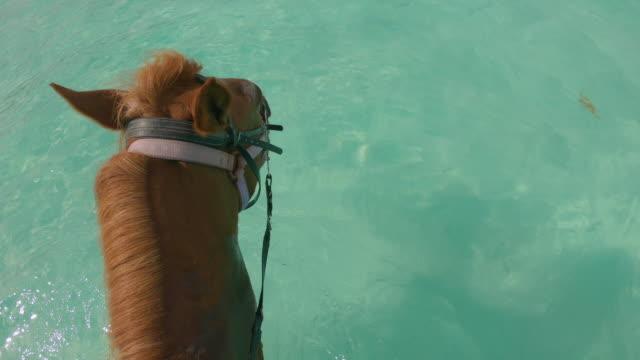 stockvideo's en b-roll-footage met paard dat door tropisch oceaanwater loopt - providenciales