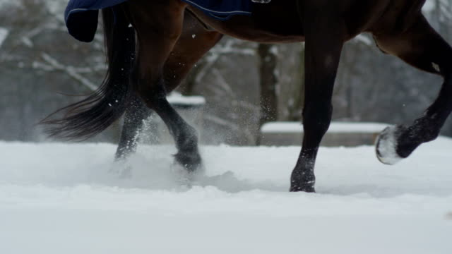SLOW MOTION: Horse with a rider running in fresh snow blanket in winter forest video