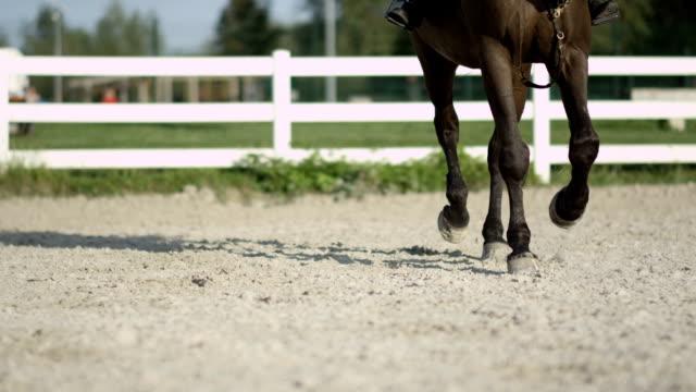屋外の乗馬競技場の競争のための練習で繋駕速歩レース ライダーと dof 馬 - 動物に乗る点の映像素材/bロール