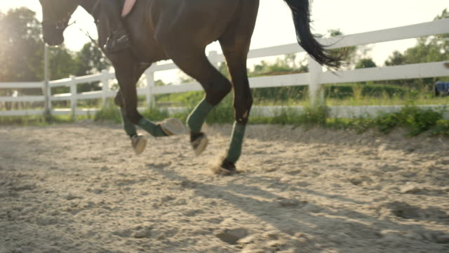 slow motion: horse with unrecognizable rider cantering in outdoor riding arena - horseshoe stock videos & royalty-free footage