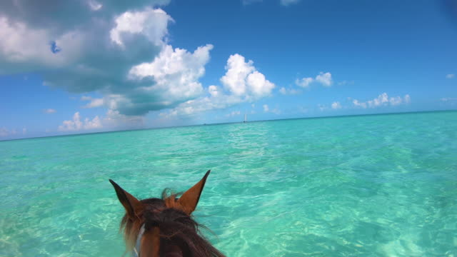 stockvideo's en b-roll-footage met paardrijden in kristalheldere turken en caicos oceaan - providenciales