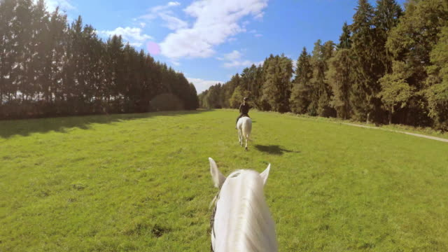 POV Horseback riding on horses running in meadow