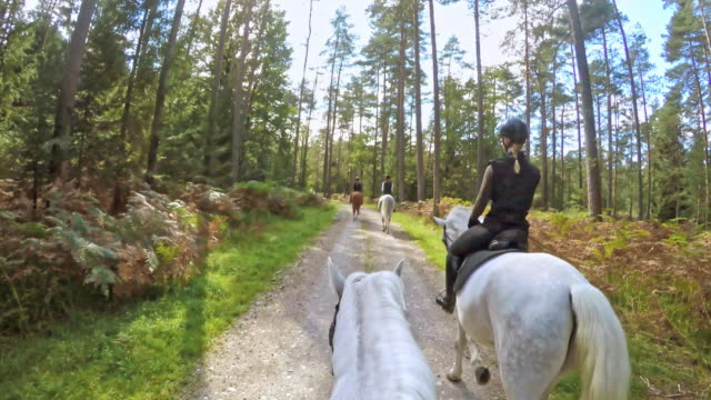 POV Horseback riding through the morning forest video