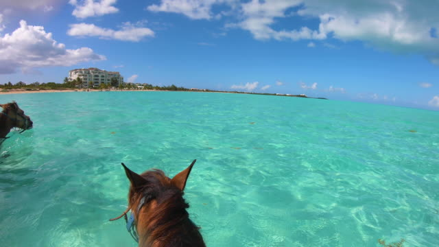 stockvideo's en b-roll-footage met horseback tour tropical beach turks en caicos - providenciales