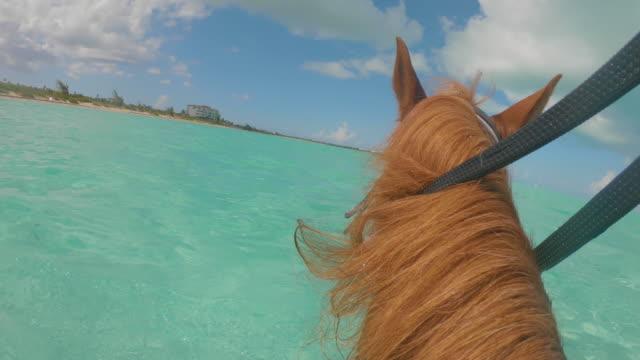 stockvideo's en b-roll-footage met horseback tour turks en caicos pov - providenciales