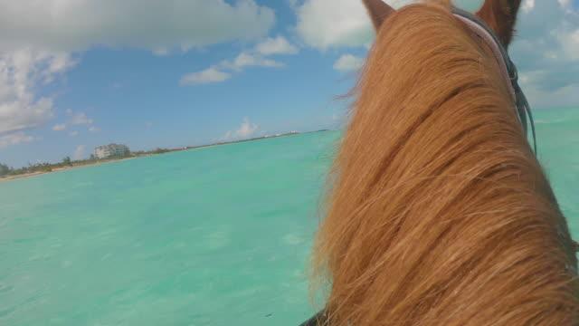 stockvideo's en b-roll-footage met paard pov turken en caicos - providenciales