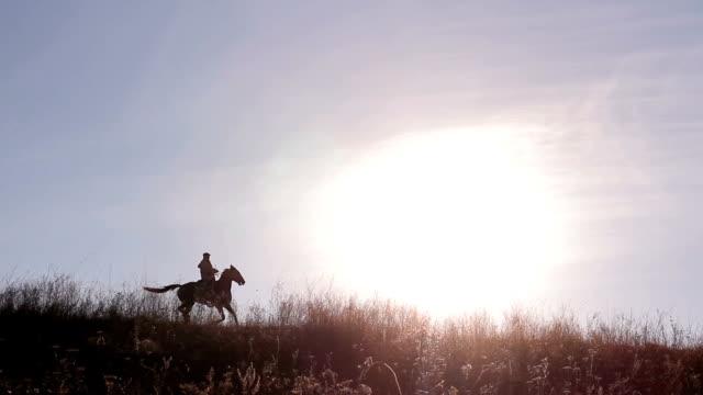 всадник. - скаковая лошадь стоковые видео и кадры b-roll