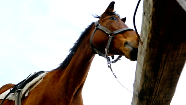 horses against the sky on horse farm, 4k - mustang video stock e b–roll