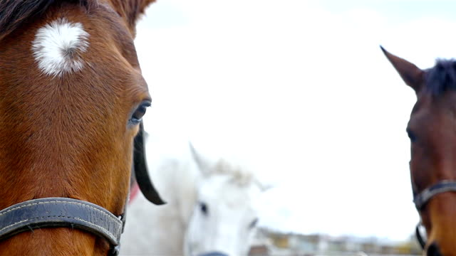 horses against the sky on horse farm, slow motion - mustang video stock e b–roll
