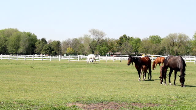 horses and foals on pasture horses and foals on pasture corral stock videos & royalty-free footage