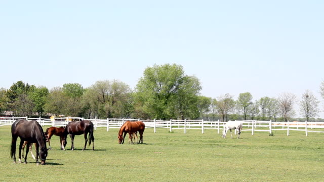 horses and foals ranch scene horses and foals ranch scene corral stock videos & royalty-free footage