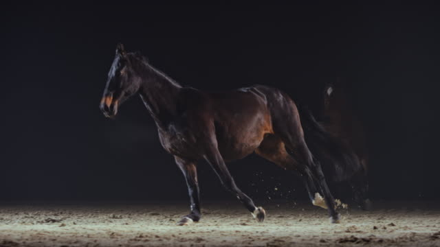slo mo hästar cantering i ridhuset på natten - häst tävling bildbanksvideor och videomaterial från bakom kulisserna