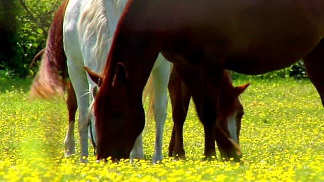 cavalli, primo piano - cavalla video stock e b–roll