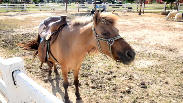 horses dancing - arto inferiore animale video stock e b–roll