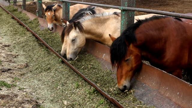 Horses eat feed from the trough Feeding horses in the pen corral stock videos & royalty-free footage