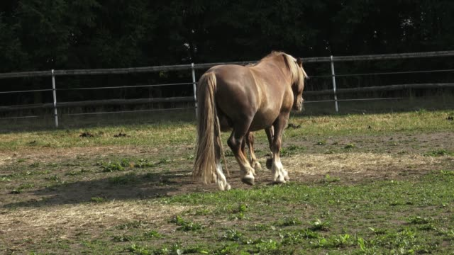 horses eating hay on the farm - cavalla video stock e b–roll