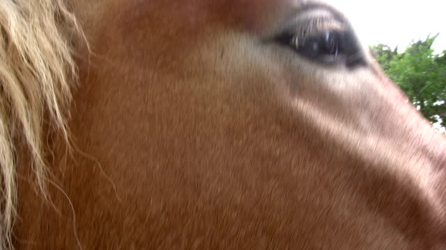 Horse's eye Horse is liked by a hand. HD 1080i. animal whisker stock videos & royalty-free footage