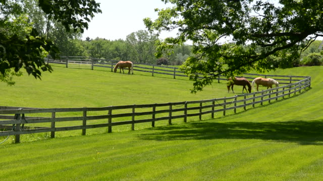 vídeos de stock e filmes b-roll de horses feeding on the green grass in a lush meadow - cercado