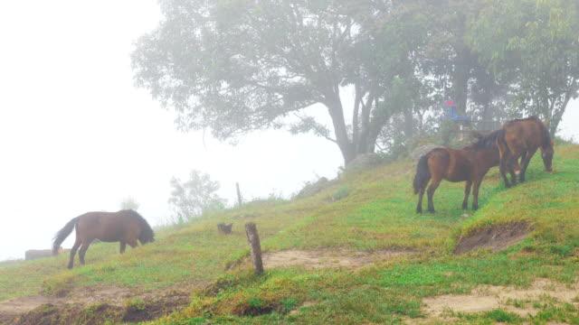 Horses grazing fresh grass green on the hillside video