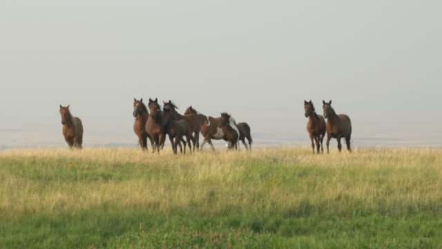 horses grazing in green pasture - animale selvatico video stock e b–roll